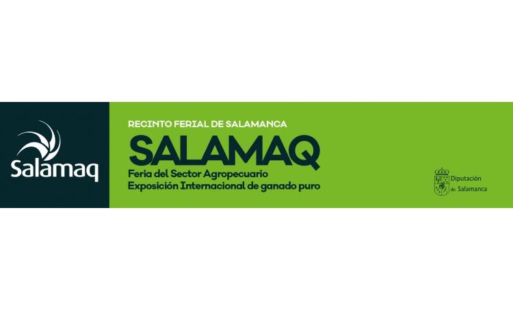 Salamaq 2019