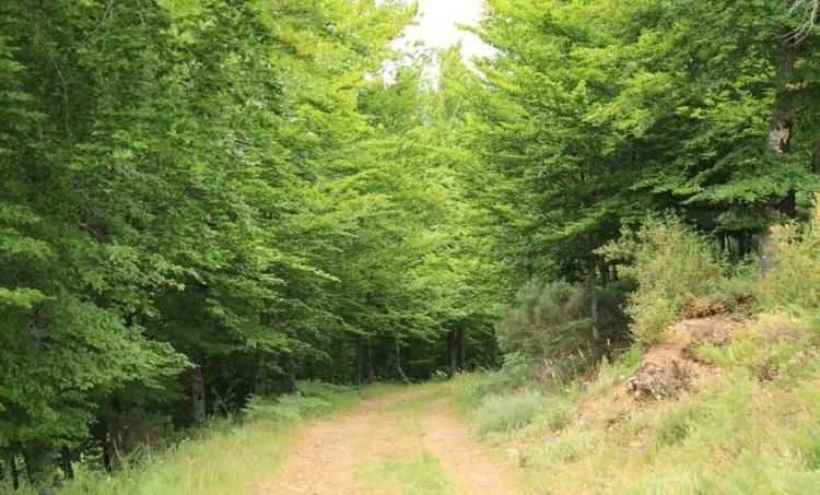 Revisão dos Planos Municipais de Defesa da Floresta Contra Incêndios